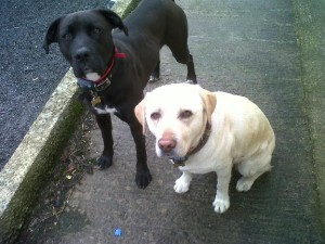 Bella and Leah
